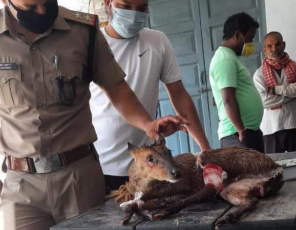 पुलिस ने रेस्क्यू कर बचाई हिरण के बच्चे की जान