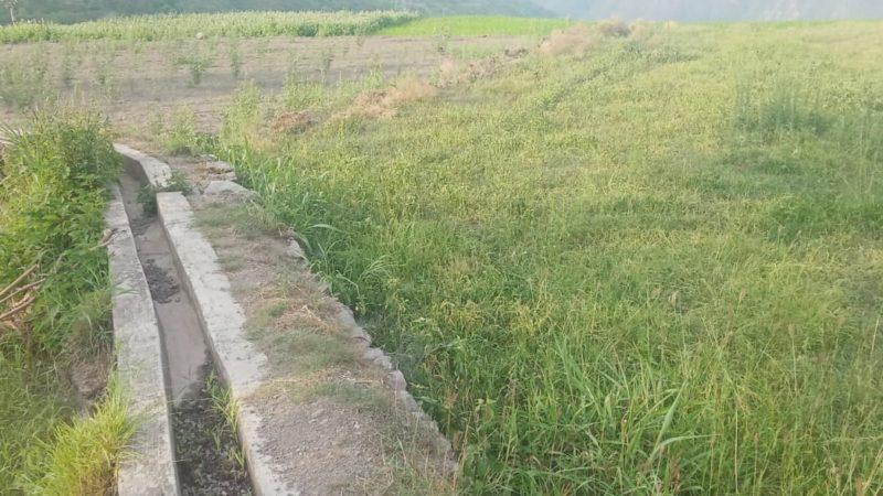 गूल क्षतिग्रस्त होने से नैचोली की कई एकड़ भूमि बंजर होने की कगार पर