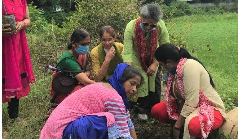 गौरा देवी जैव-विविधता तालाब संरक्षण हेतु हेरला पर्व में वृक्षारोपण