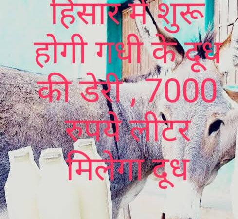 जानिए कहां शुरू हो रही गधी के दूध की डेयरी: 2 से 7 हजार रुपए लीटर कीमत