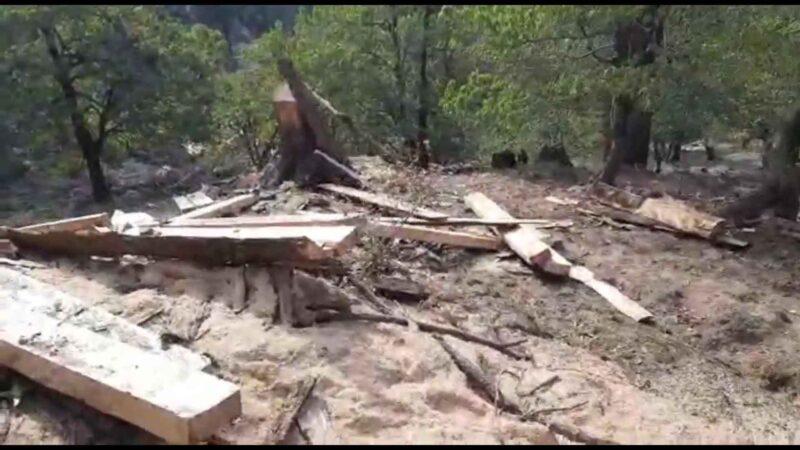 1974 के बाद फिर से बयाली-हरन्ता के जंगलों पर चली कुल्हाड़ी-आरियां