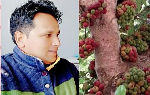 तिमला: बेमिसाल औषधीय गुणो से भरपूर एक स्वादिष्ट जंगली फल