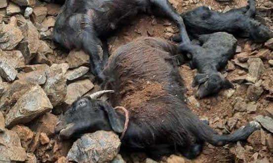 मकान ढहने से 15 बकरियों की मौत 8 घायल